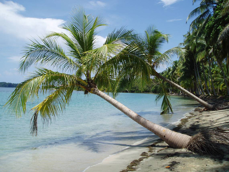 bocas del toro latino personals A two-week adventure that packs in arenal volcano, monteverde cloud forest, bocas del toro archipelago, san josé, panama city, and the panama canal.