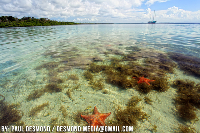 starfish-beach-isla-colon-bocas-del-toro