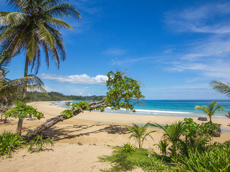 Bocas Del Toro Hotels: Red Frog Beach Island Resort & Spa